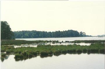 mld-wetland95.jpg